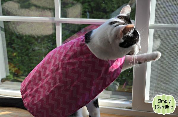 Cat in a Superhero Cape