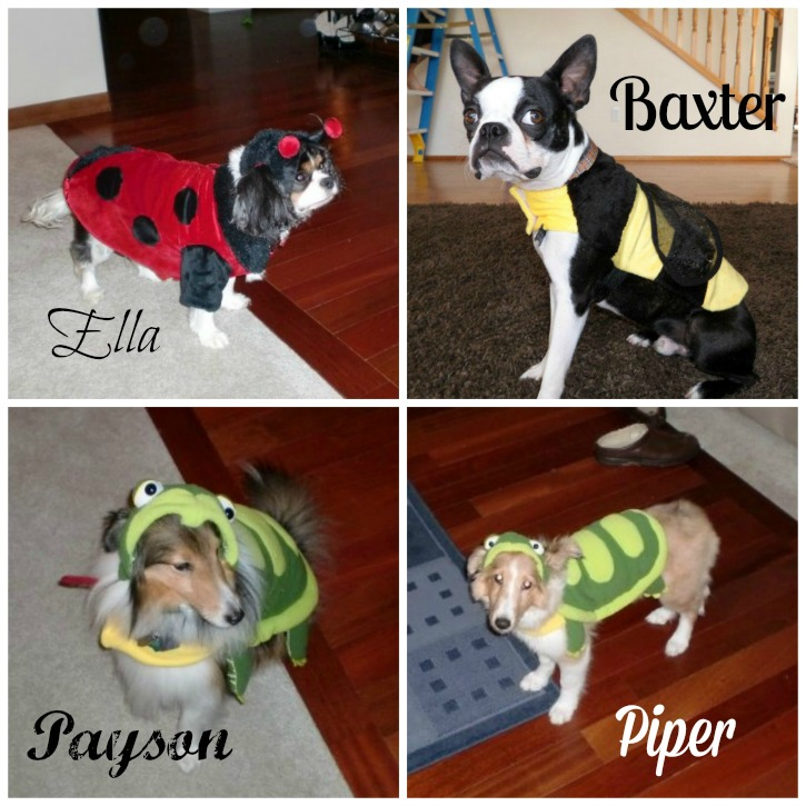 Halloween Dog Costume Contest #shop