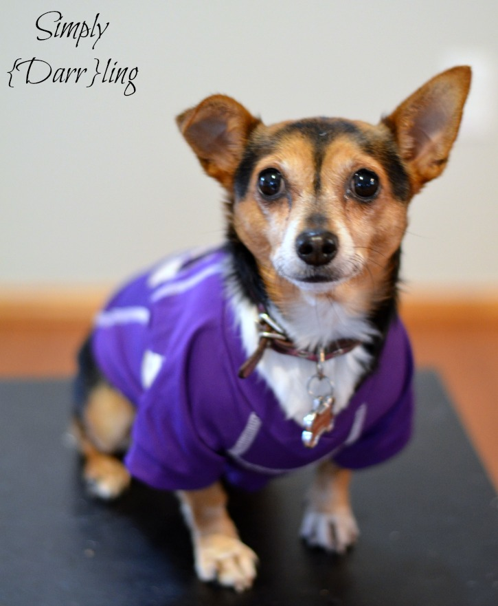 Princess in Husky Jersey #shop