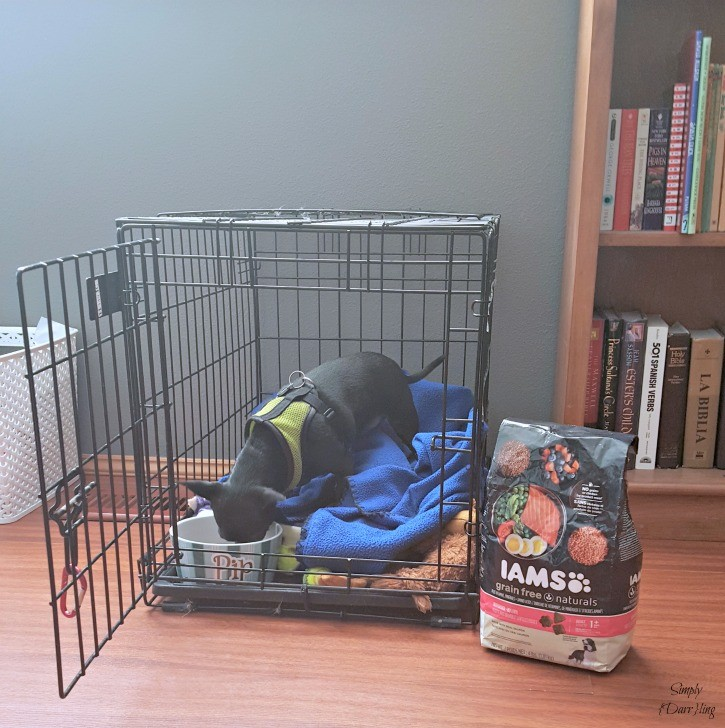 Pip with new bed and IAMS dog food
