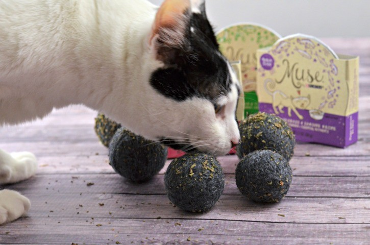 Cat sniffing felted catnip bal