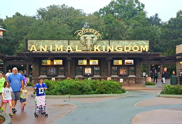 One Day At Animal Kingdom With A Toddler