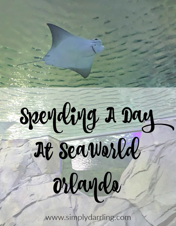 Spending A Day At SeaWorld Orlando