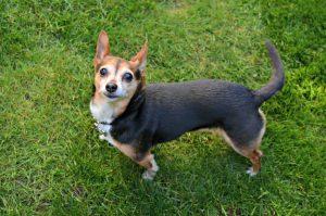 Tips To Create A Pet-Safe Backyard