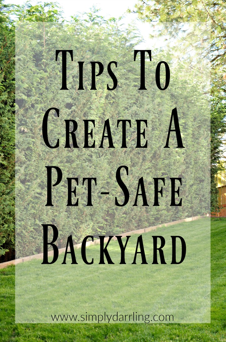 Tips To Create A Pet-Safe Backyard