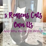 5 Reasons Cats Own Us – And Why We're OK With It