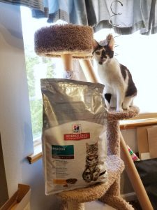 5 Reasons Cats Own Us - Hills Science Diet Cat Food