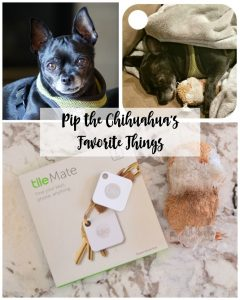 Pip the Chihuahua's Favorite Toys