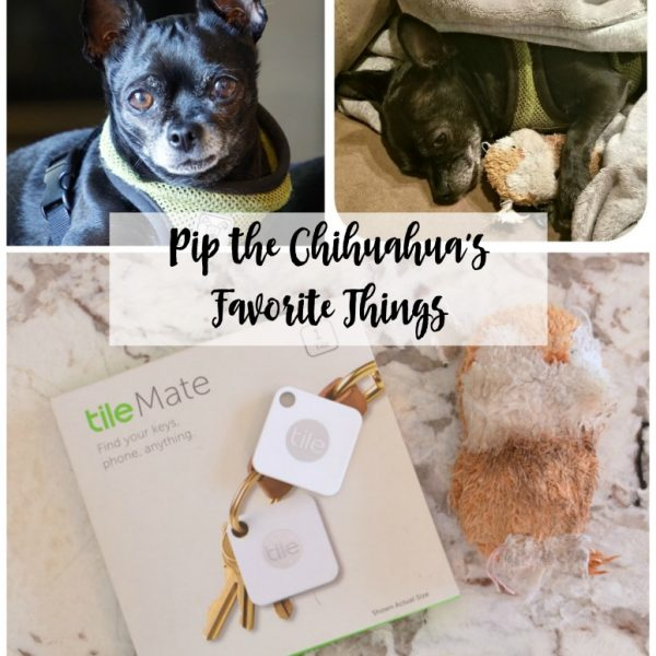 Pip the Chihuahua's Favorite Things