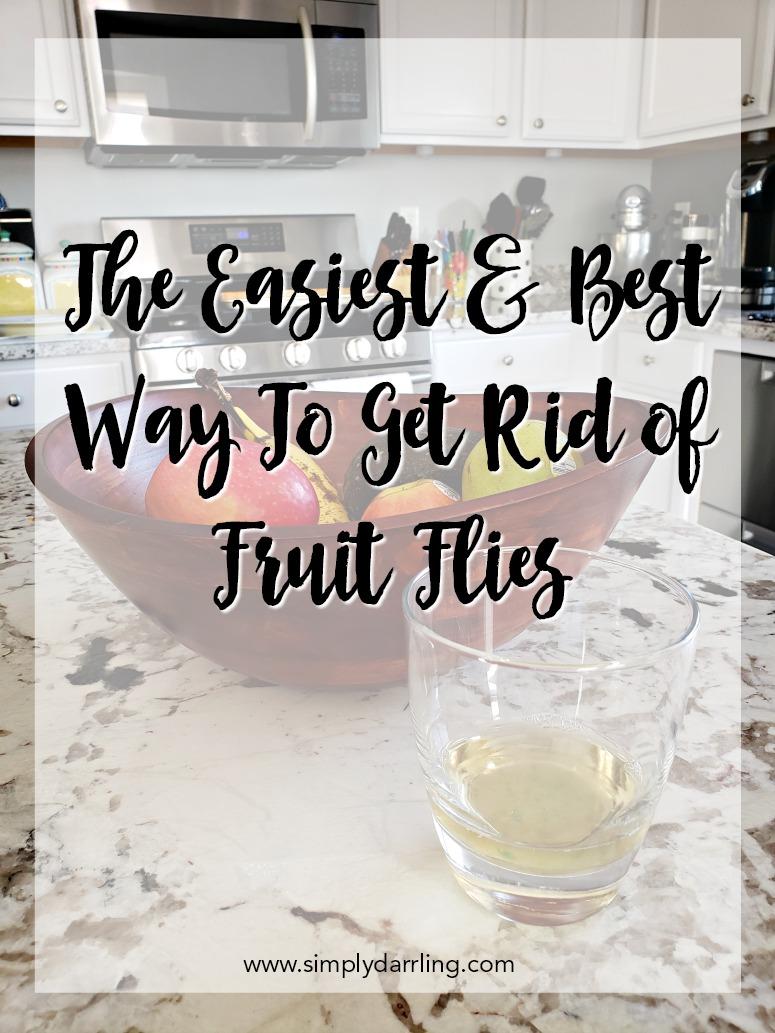 Easiest & Best way to get rid of fruit flies