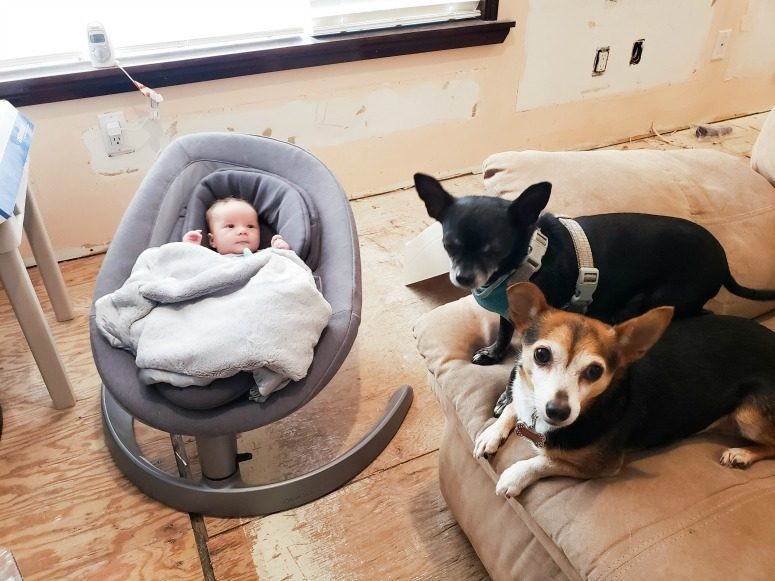2 dogs, baby and the Nuna Leaf