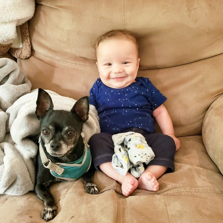 Baby with Pip the Chihuahua