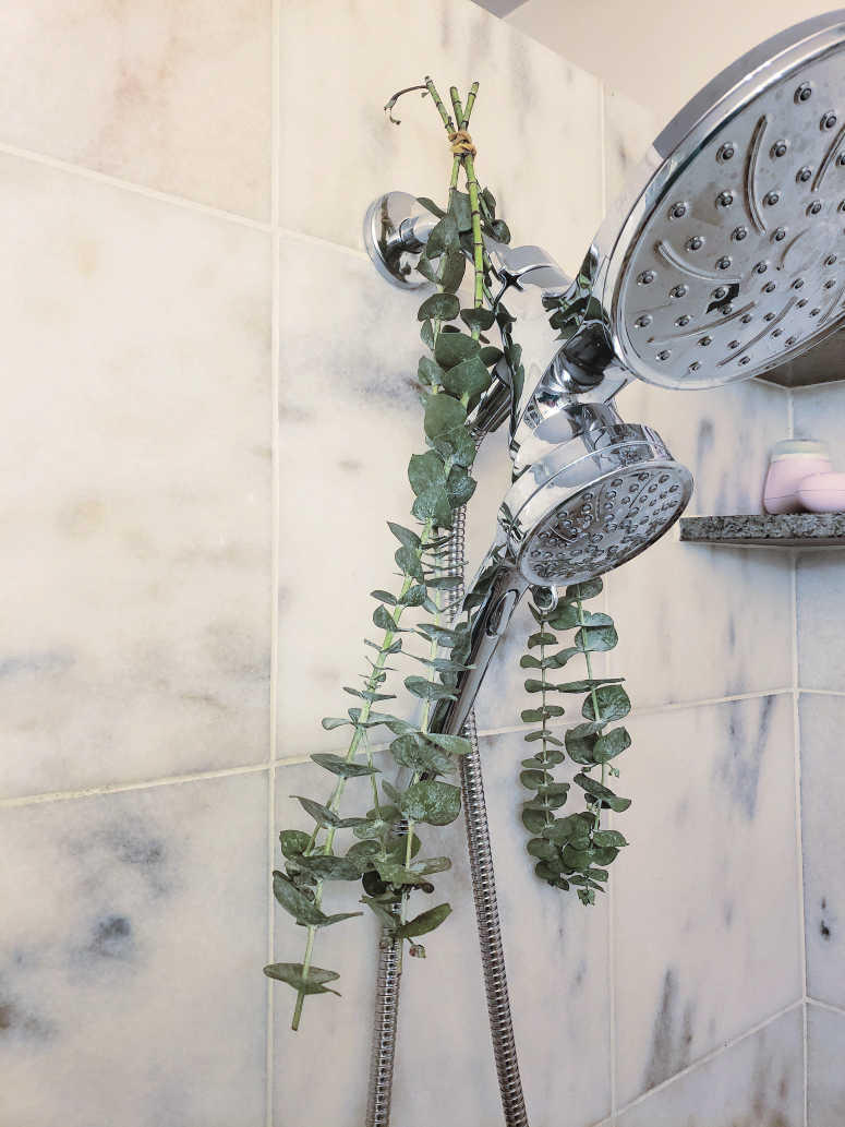 Eucalyptus hanging from shower head